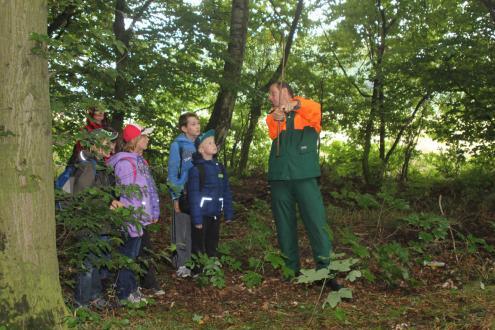 Ranger Peter Ulbrich erklärt, wie man nur mit einem Stock die Baumhöhe messen kann